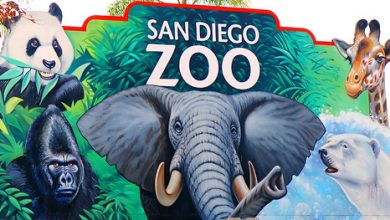 Photo of サンディエゴ動物園
